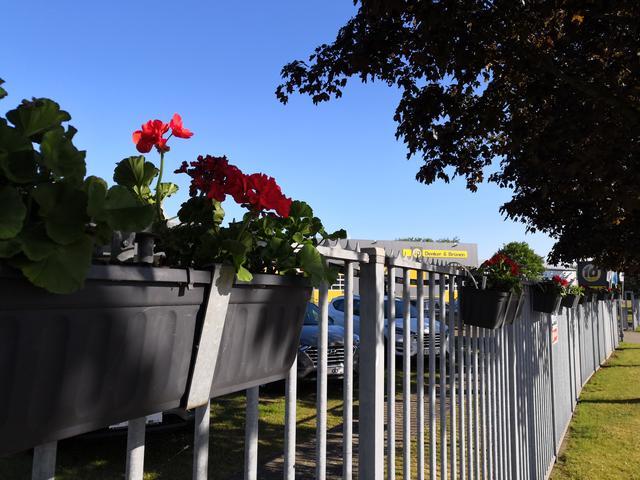 Da wo die Blumen blüh'n - endlich sind die Blumenkästen wieder bepflanzt